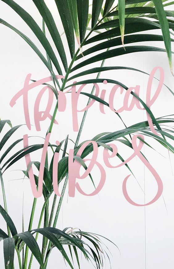 pink-pack-tropical-vibes-inspiration1