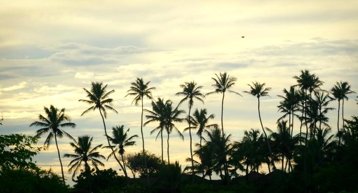 jeri-palmtrees