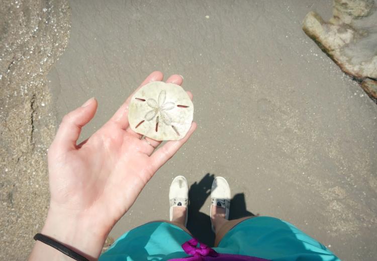 pierrepercee-sanddollar